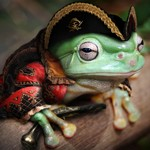 Frogman12834