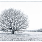 Winter Landscapes 2012