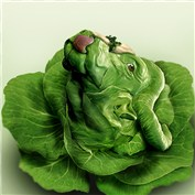 Food Literalisms 6