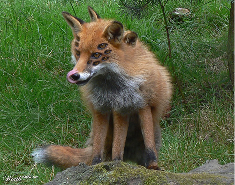 Gallery images and information: Chernobyl Animal Mutations Human Animal Mutations
