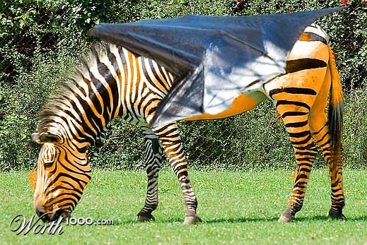 Horse Mating With Zebra Zebra tiger bat!