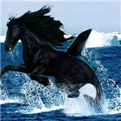 emerging horsewhale