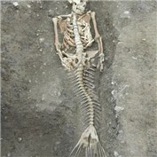 Mermaid Skeleton Found!