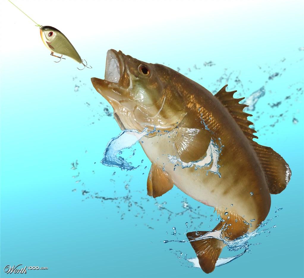 Big bass fishing worth1000 contests for Big bass fishing