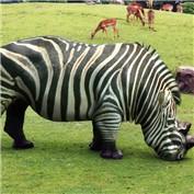 Animal Crossbreed