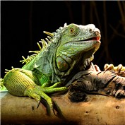 Intermediate: Reptiles 2014