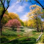 Cemeteries 2014