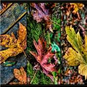 Bonus: Autumn Triptych 2014