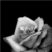 Flowers in Black and White 2015