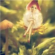 Pixie-dandelion.