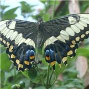 B2B - Butterfly
