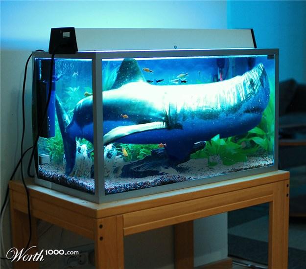 Mini shark fish tank for Small sharks for fish tanks