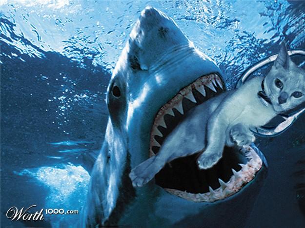 Dogs As Shark Bait Video