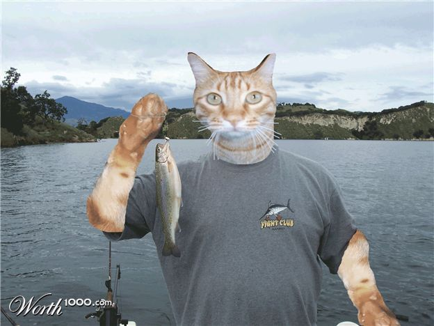 What is cat fishing girlsaskguys for Cats go fishing