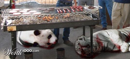 White Tigers Eating Meat White Tiger Meat as Well