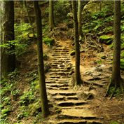 Paths 2014