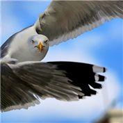 Beginner: Things with Wings 2015