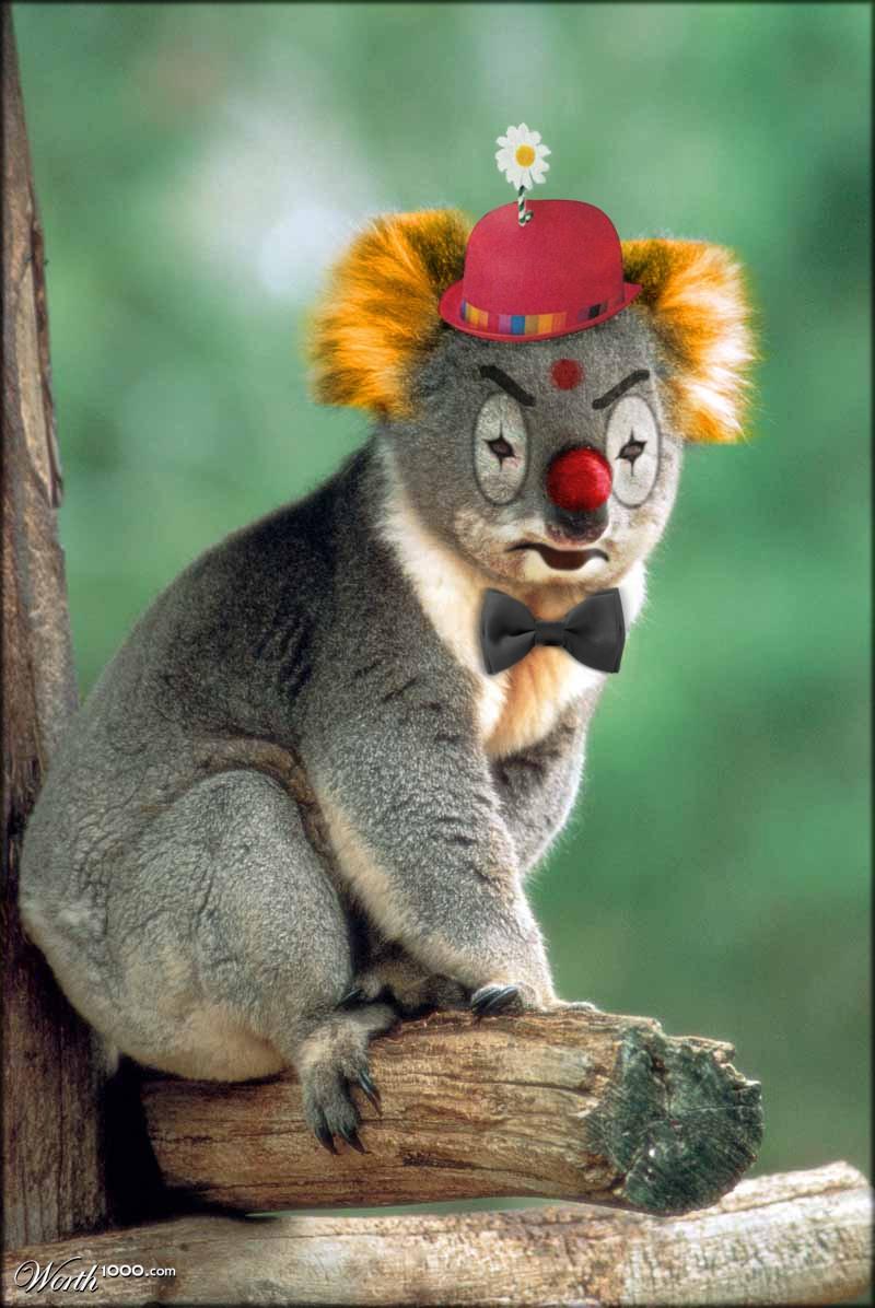 Koala Angry Clown Worth1000 Contests