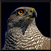 Masters: Animal Portraits 2011