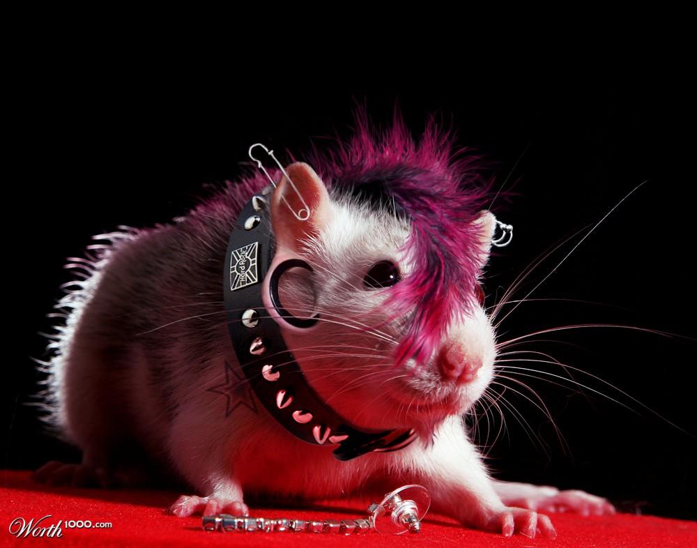 punk rock rat   worth1000 contests