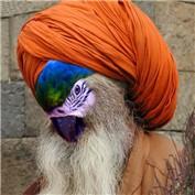 Maharishi Macaw