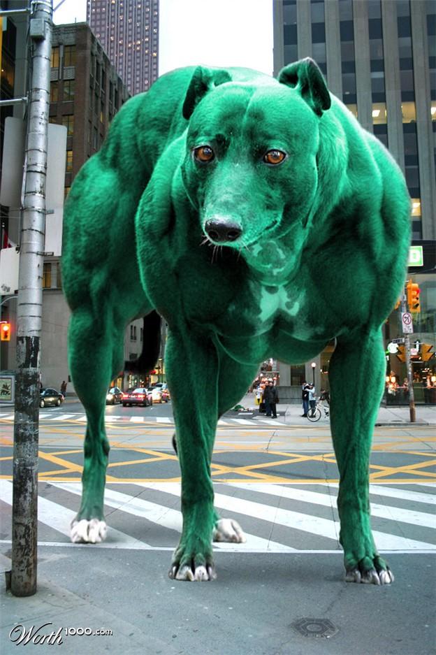 steroids for dogs prednisone