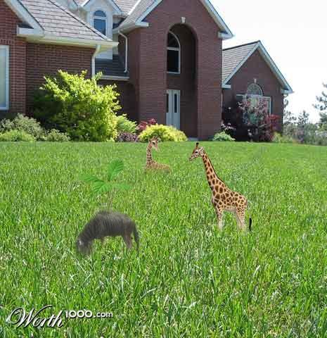 Real Mini Animals Real Mini Animals Mini...