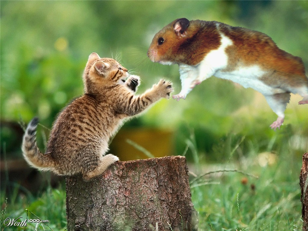 Cat VS Hamster - Worth1000 Contests