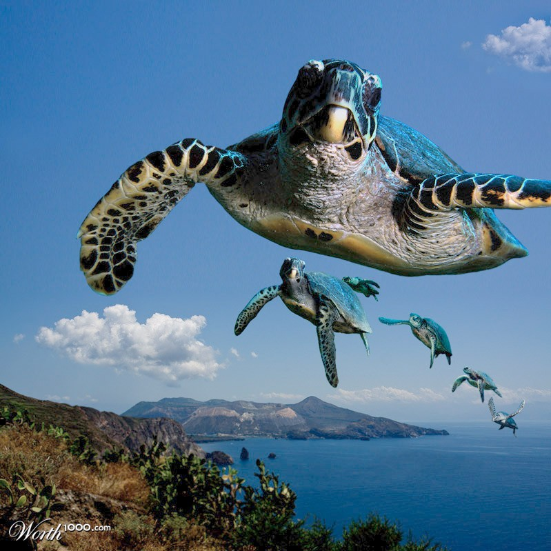 Flying turtle meme - photo#21