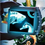 X-Ray Vision 8
