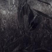 B2B - Scarecrow