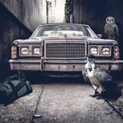 B2B - Vulture