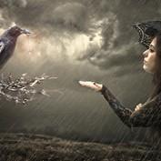 B2B - Crow