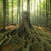 B2B - Wooden Head