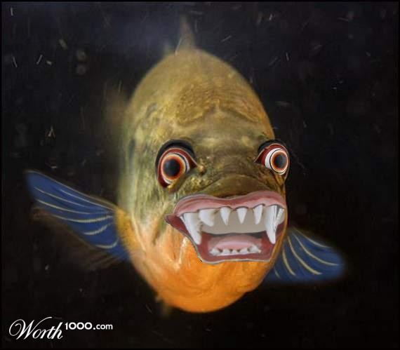 Ugly fish worth1000 contests for Ugly fish pictures