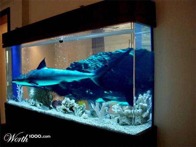 Shark fish tank home for Fish tank sharks