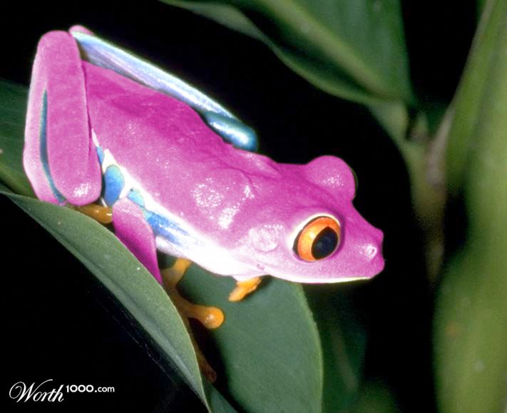 Pink frog - photo#2