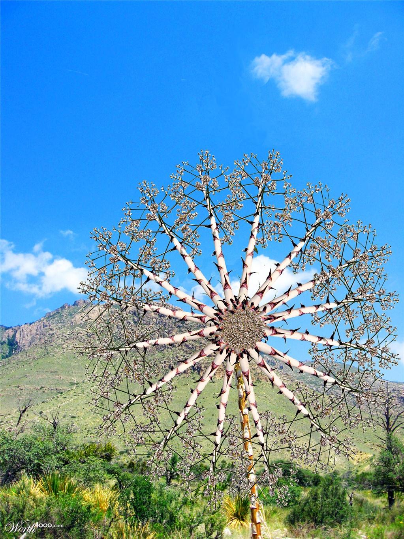 Weird Tree Weird tree, strange flower by