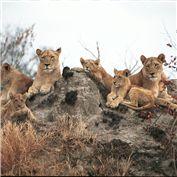 Beginner: Wildlife 2015