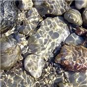 Intermediate: Pebbles and Stones 2015