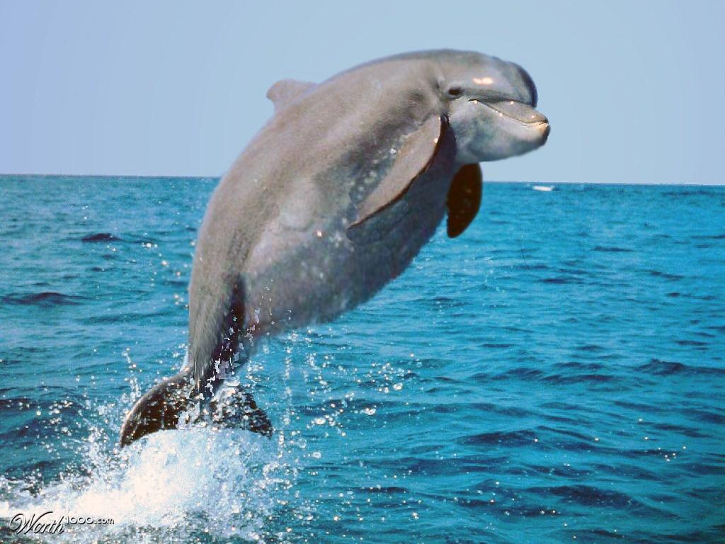 delpin