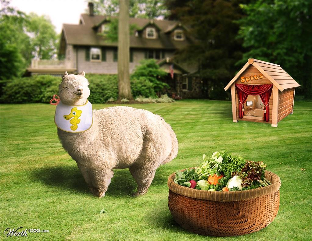 Fat Happy Lama - Worth1000 Contests