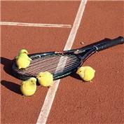 Sport Swap 3