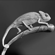Reptiles in Black and White 2015