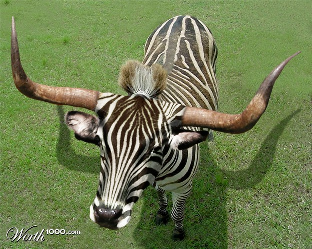 Animal Crossbreed Worth1000 Contests