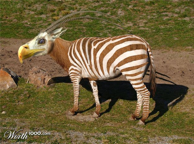 Zebra Horse Giraffe Hybrid | www.pixshark.com - Images ...