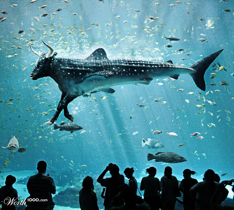 Bull Shark In An Aquarium – Quotes of the Day