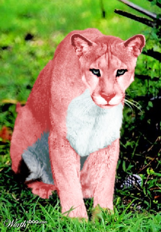 Real Life Pink Panther She 39 s a Real Pink Panther