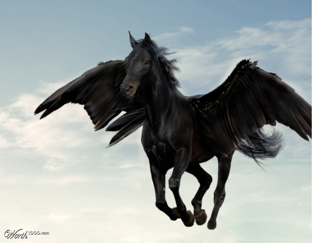 black pegasus by machacasaurio 12th place entry in unicorns and pegasi    Black Pegasus