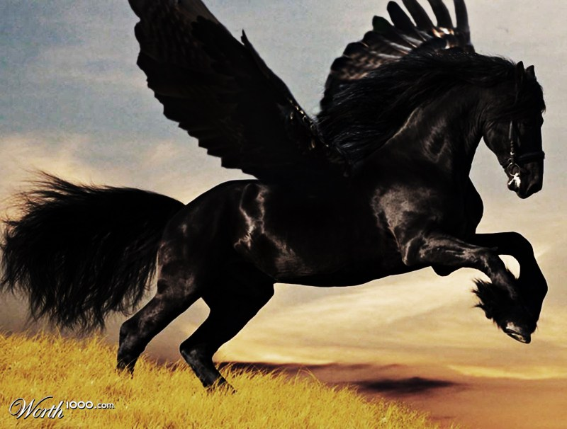 Black Pegasus Black pegasus by brunosmBlack Pegasus